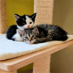 Katzenkinder – die obere ist Xania – sehen immer niedlich aus. Aber sie brauchen verlässliche Pflegefamilien, die bereit sind, für viele Jahre Verantwortung fürs Tier zu übernehmen. Foto: nh
