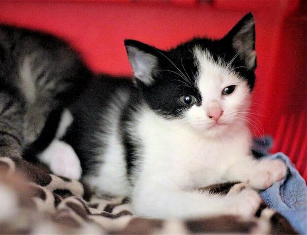Xania ist ein hübsches Katzenkind, das seit Kurzem für ein neues Zuhause bereit ist. Foto: nh