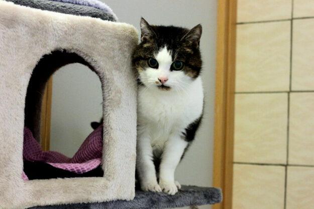 Katzendame Luna sucht einen kuscheligen Alterssitz. Foto: nh