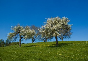 pollenbach-sommerzeit1